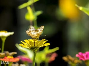 A Butterfly on a Flower 2