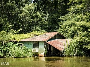 House Hunt for Swamp Getaway