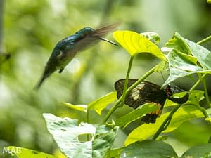 Hummingbird Meets Butterfly